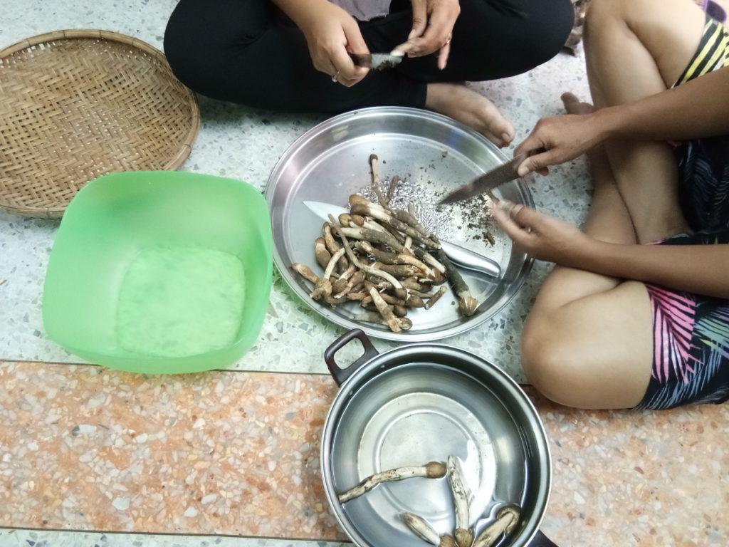 Cleaning termite mushrooms Kanchanaburi